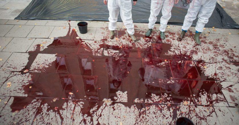 krew, rzeźnia, przemysłowa hodowla zwierząt