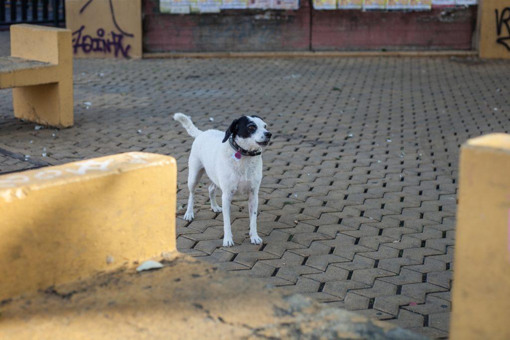 Pies na Alameda de Hércules w Sewilli. Fot. Dawid Krawczyk
