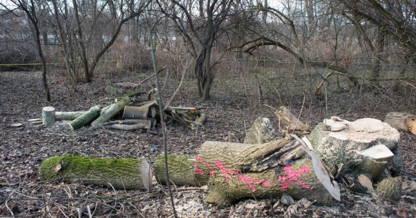 Wycinka drzew nad Wisłą. Fot. Jakub Szafrański