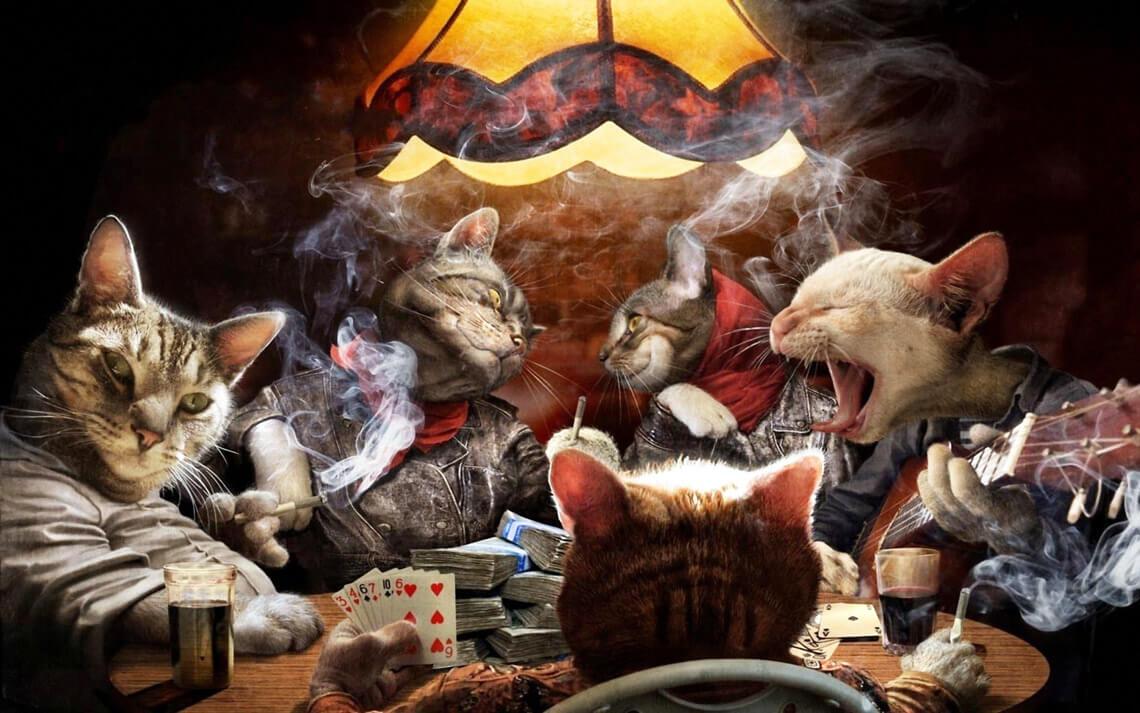 koty-impreza