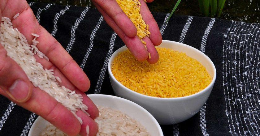 Golden-Rice