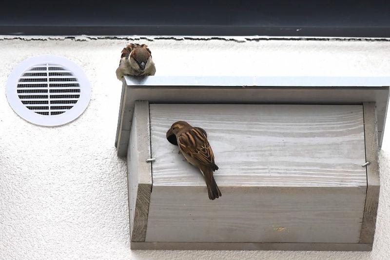 ptaki-budka-legowa