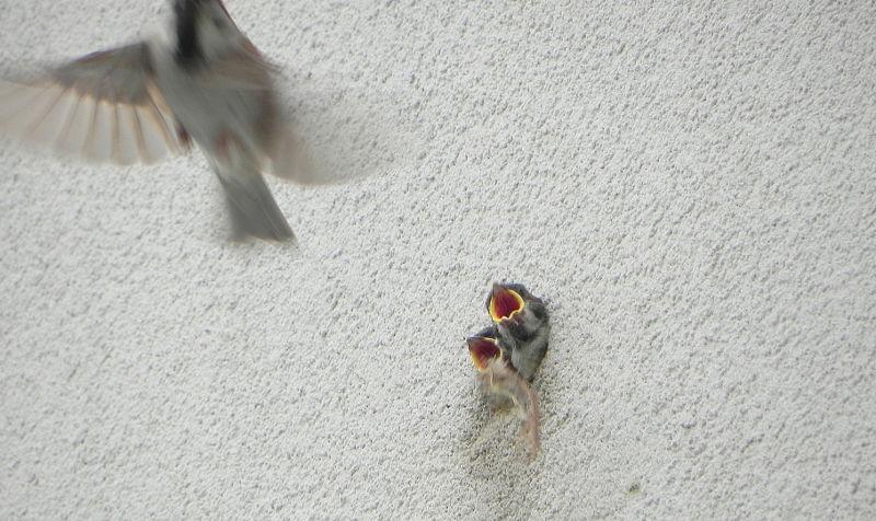 ptaki-w-budynku