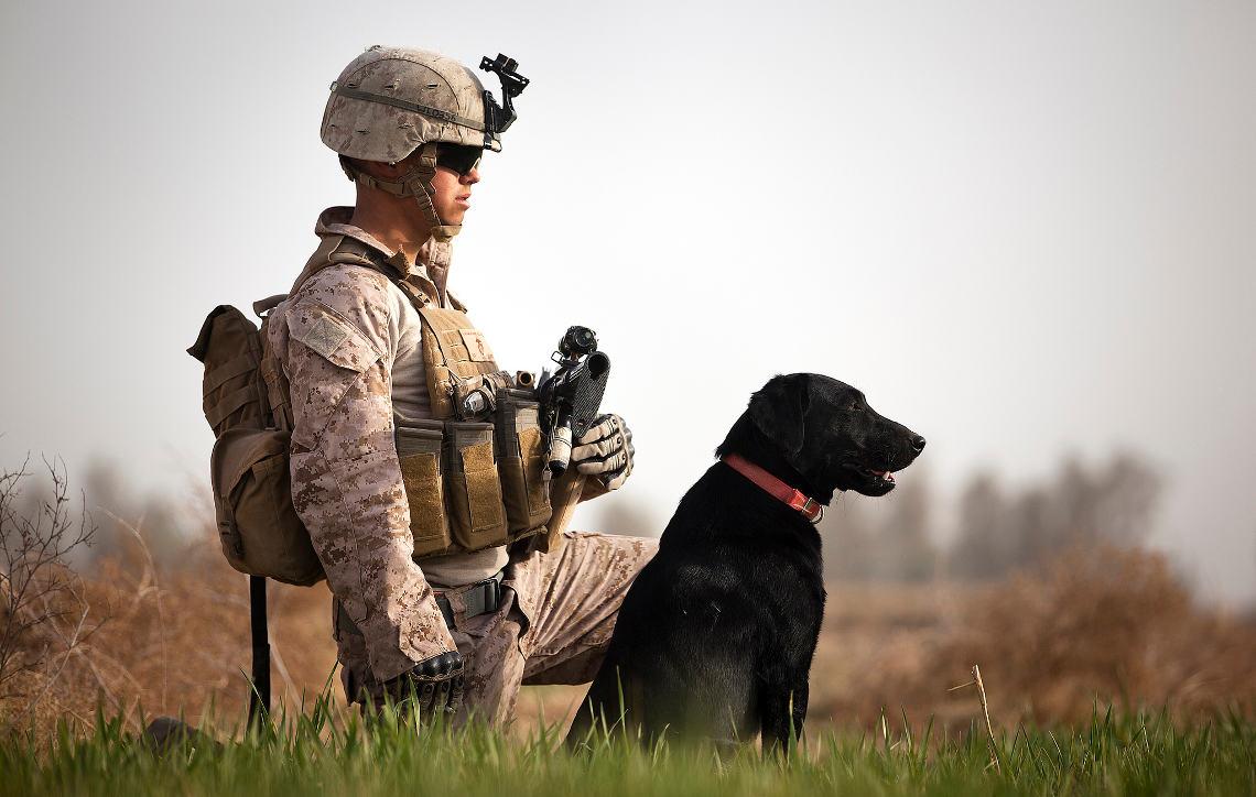 pies-wojna
