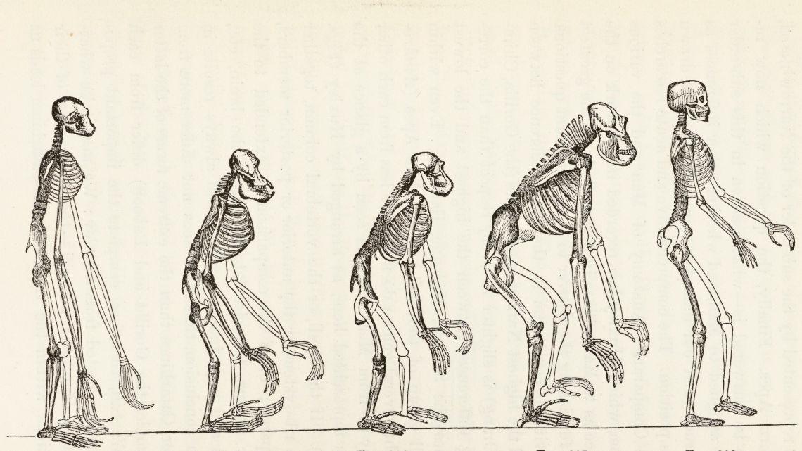 ewolucja-człowieka