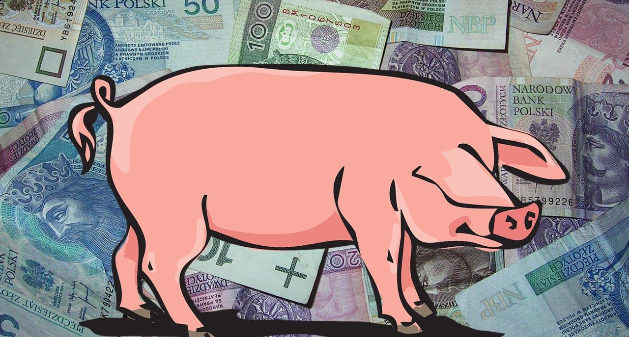 swinia-500-plus