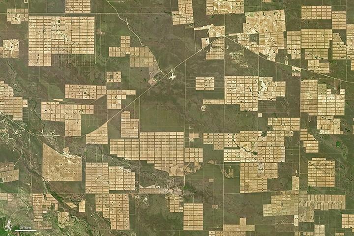 deforestacja-chaco-paragwaj