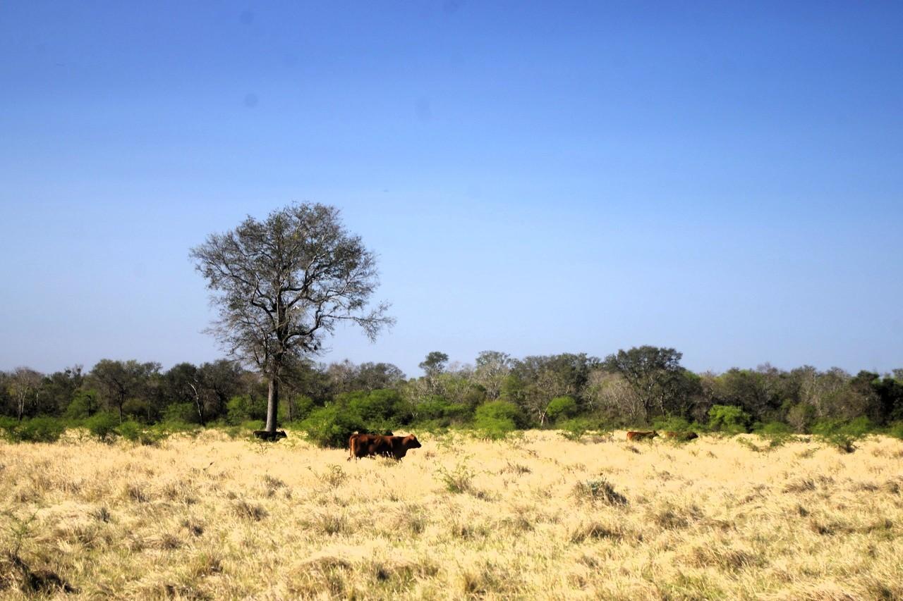 deforestacja-chaco-paragwaj-wojciech-ganczarek (1)