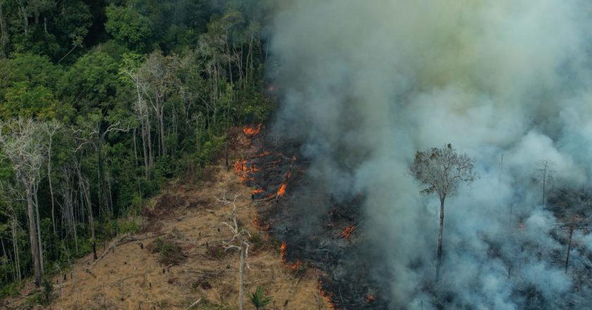 Amazonia las pożar