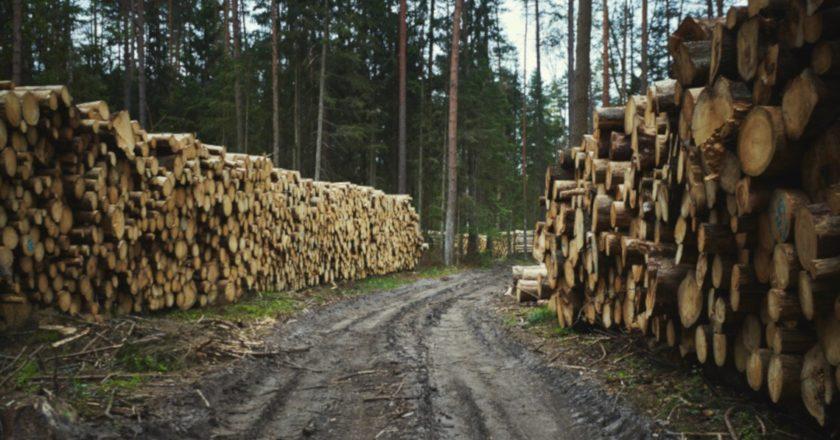wycinka lasy państwowe