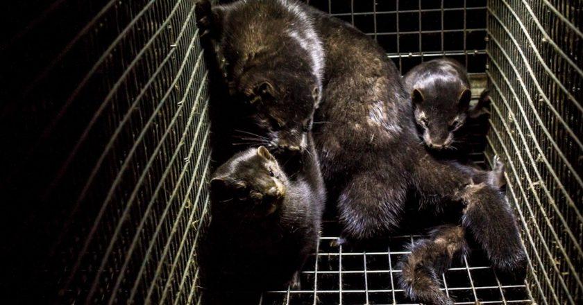 Fot. Dzīvnieku brīvība/Flickr.com