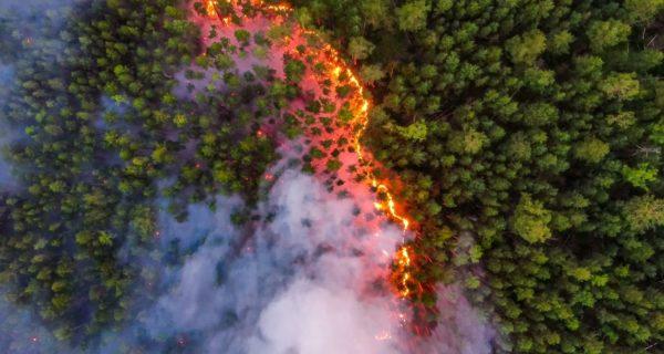Pożary Syberia Greenpeace