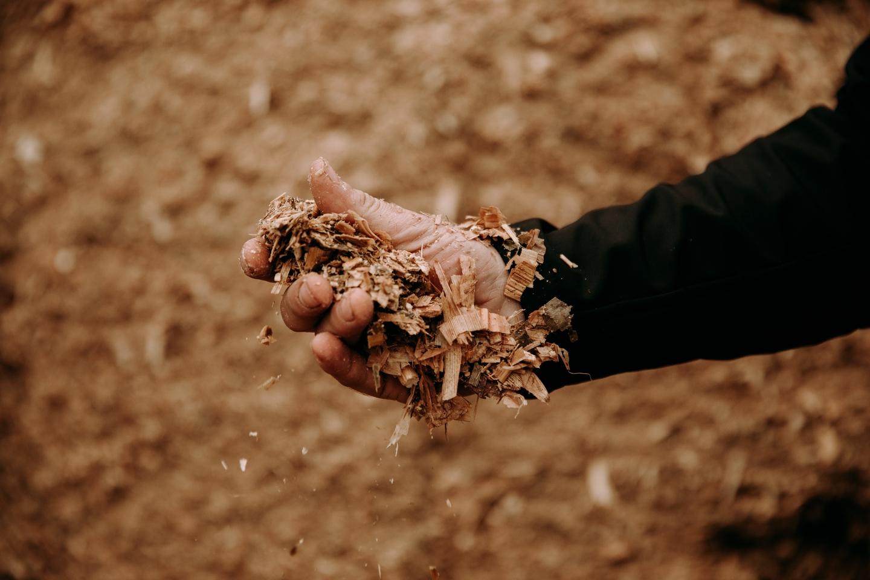 Kiszonka z kukurydzy, fot. Dawid Żuchowicz
